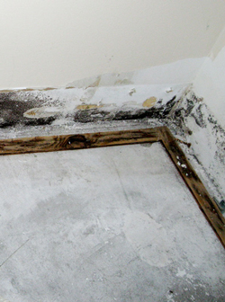 Mold Damage in Fort Lauderdale